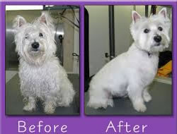 Dog Grooming in Beverly Hills CA